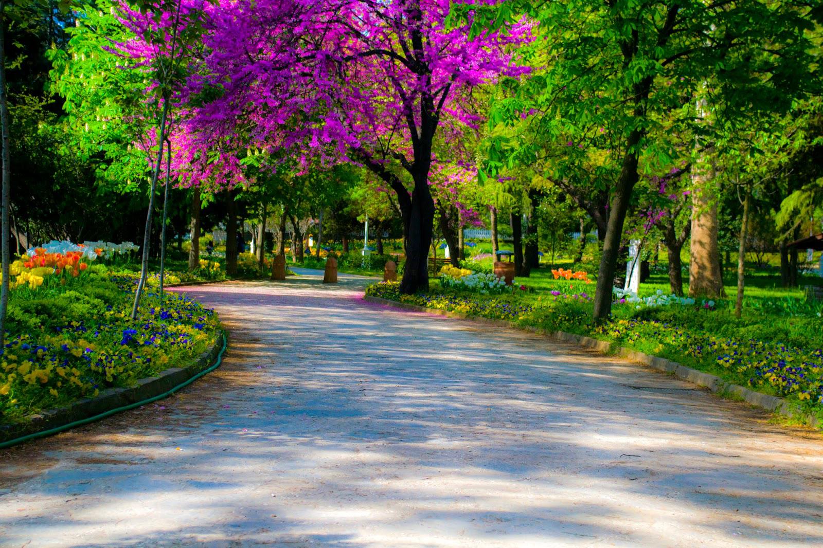 Fenerbahçe parki düğün çekimi